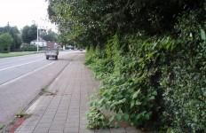 Proper Hove Haag